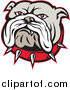 Vector Clipart of an Angry Red Eyed Bulldog Face and Spiked Collar Logo by Patrimonio
